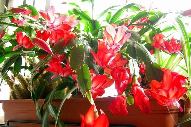Piante da balcone invernali piante da giardino come for Piante da balcone sempreverdi