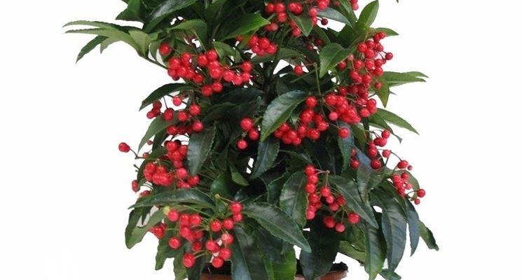 piante da esterno invernali piante da giardino piante