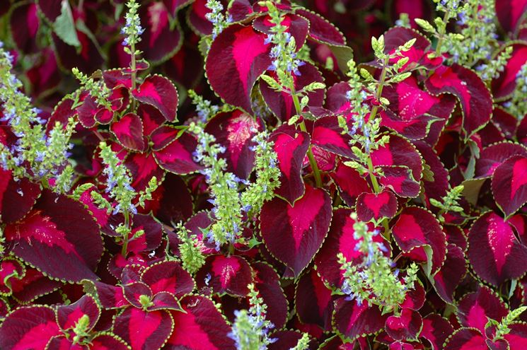 Piante da esterno sempreverdi piante da giardino for Nomi piante da giardino
