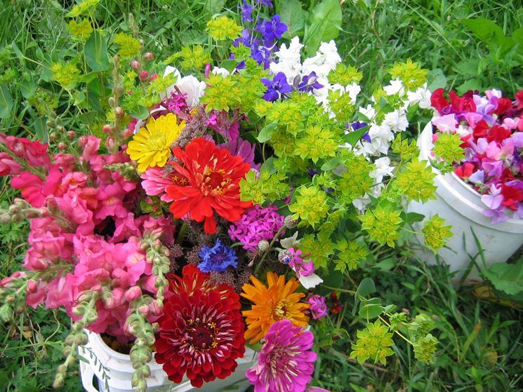 Piante da fiori in giardino
