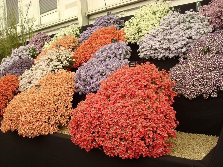 Piante da fiori piante da giardino piante da fiori - Piante particolari da giardino ...