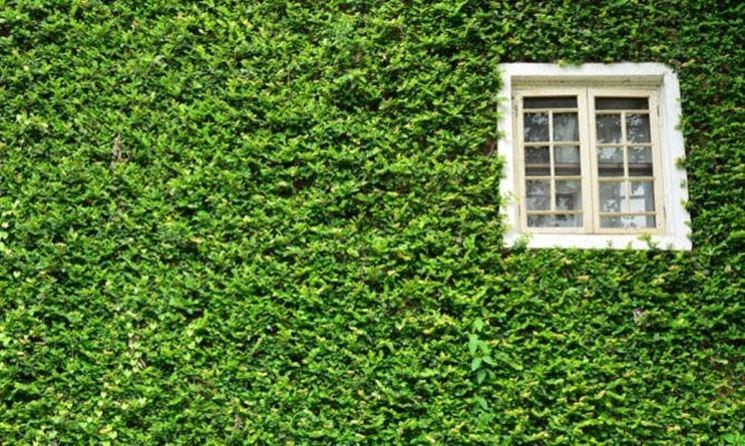 Piante rampicanti dwg idea creativa della casa e dell - Piante da giardino invernali ...