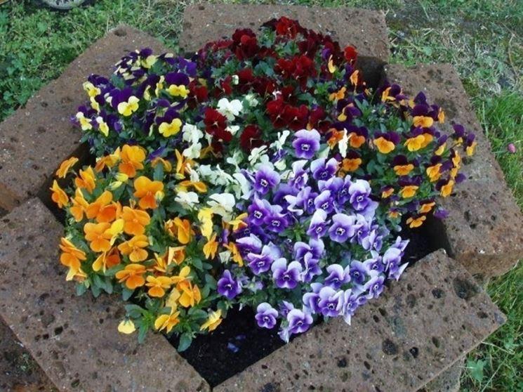 Piante da giardino invernali piante da giardino piante invernali giardino - Piante da giardino profumate ...