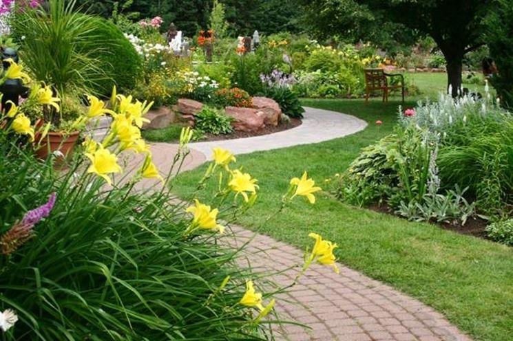 piante da giardino sempreverdi - piante da giardino - le ... - Piante Sempreverdi Da Esterno Con Fiori
