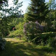 piante sempreverdi da giardino