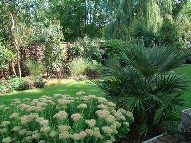 Palme nei giardini