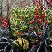 Composizione da esterno con piante invernali