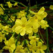 piante invernali da esterno