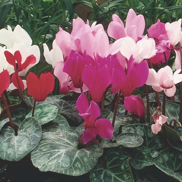 Piante invernali piante da giardino piante adatte all 39 inverno - Piante da giardino invernali ...