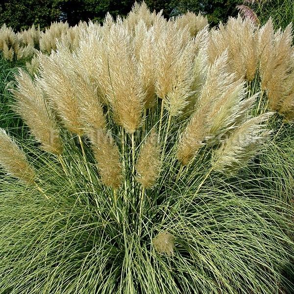 Piante ornamentali da esterno - Piante da giardino - Come scegliere le piante da esterno