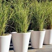 piante ornamentali da esterno