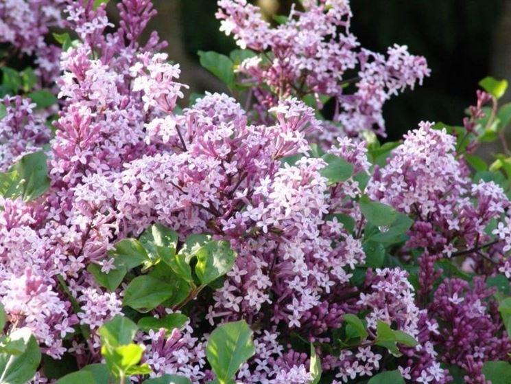 piante ornamentali piante da giardino come scegliere