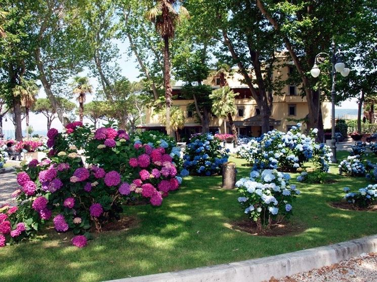 Molto Piante per aiuole - Piante da giardino - Scegliere le piante per  AI11