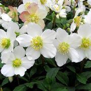aiuole fiorite tutto l anno