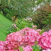 Scorcio di un meraviglioso giardino
