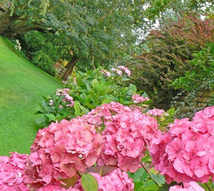 Piante per giardino piante da giardino scegliere le piante per il giardino - Piante da giardino economiche ...