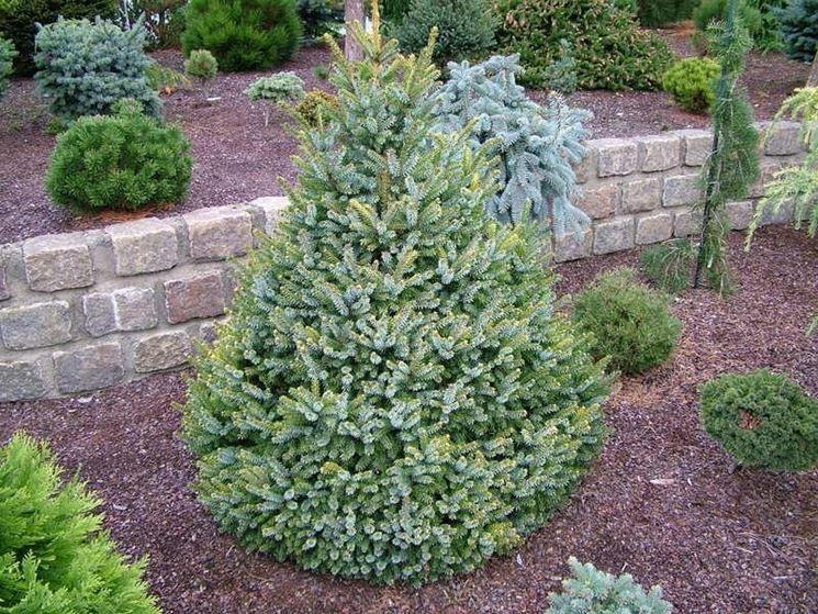 Piante sempreverdi da giardino piante da giardino for Piante verdi perenni da giardino