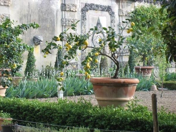 Piante sempreverdi da giardino piante da giardino for Piante da giardino tropicali