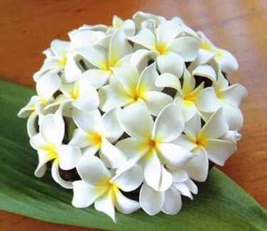Bouquet da sposa fatto con fiori di pomelia