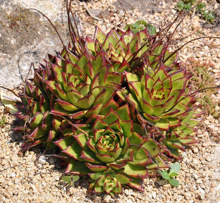 Bellissimo giardino di piante grasse