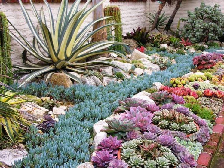 Aiuole di piante grasse - Piante grasse - Creare aiuole con le piante grasse