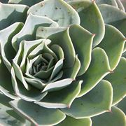 Annaffiatura piante grasse