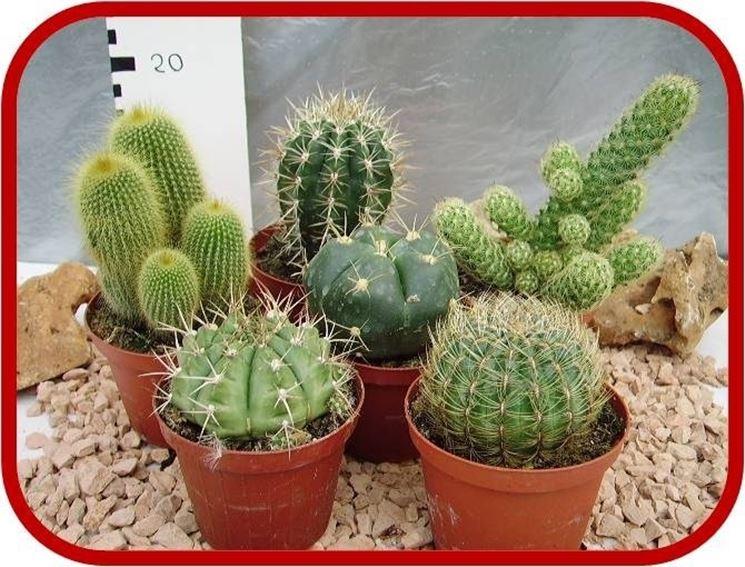 Bomboniere piante grasse piante grasse bomboniere for Piante grasse rare