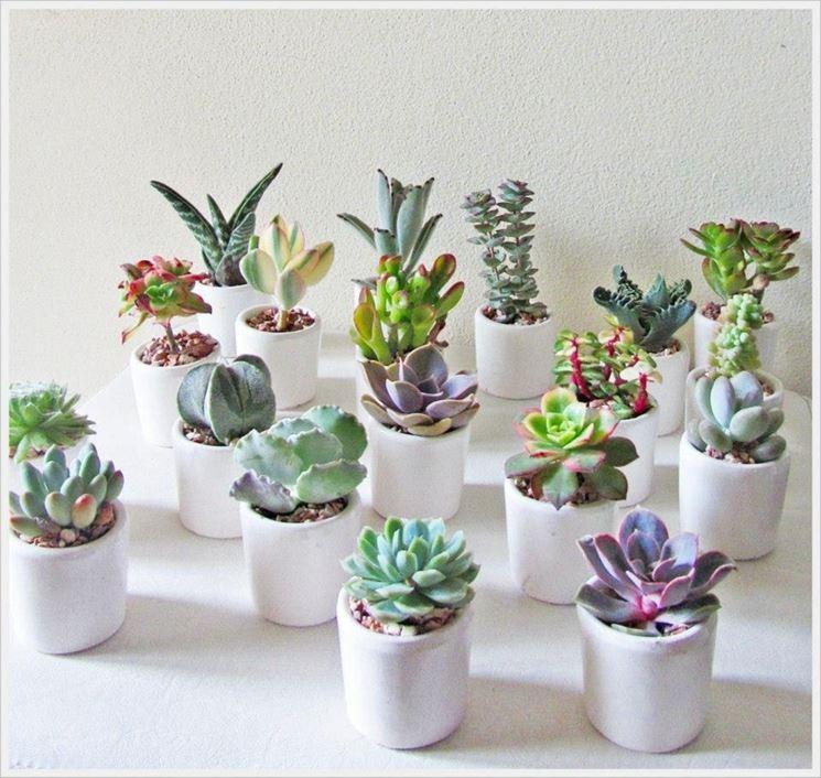 Bomboniere piante grasse piante grasse bomboniere for Decorazioni giardino online