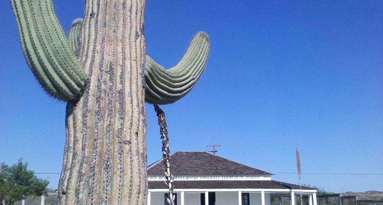 il cactus saguaro è una pianta protetta