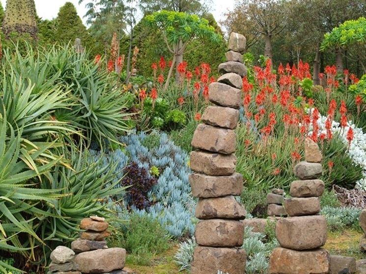 Giardino roccioso di piante grasse