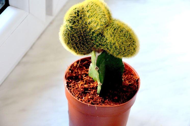 Una pianta grassa nel terreno corretto