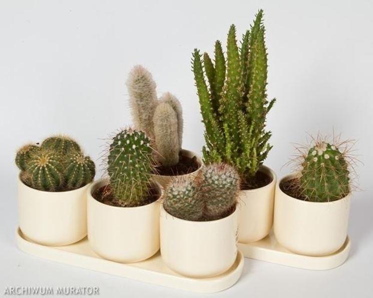 Delle piante grasse correttamente trapiantate