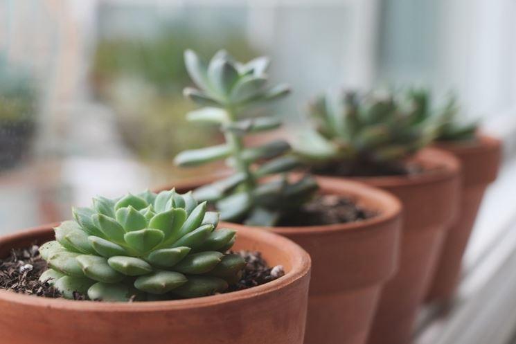 piante grasse in vasi di terracotta