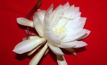 primo piano fiore