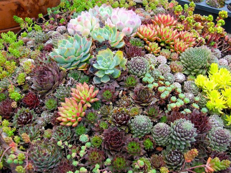 giardino con piante grasse attaccate