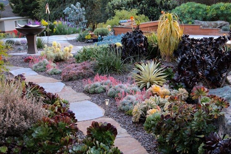 giardino fatto solo con piante grasse