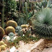 giardini con piante grasse
