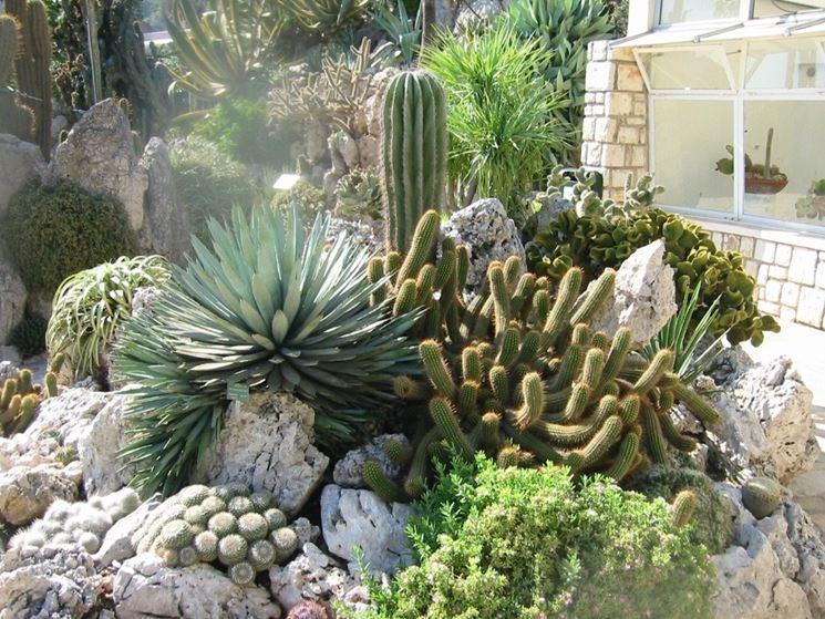 Giardini piante grasse piante grasse giardini piante - Giardino roccioso piante grasse ...
