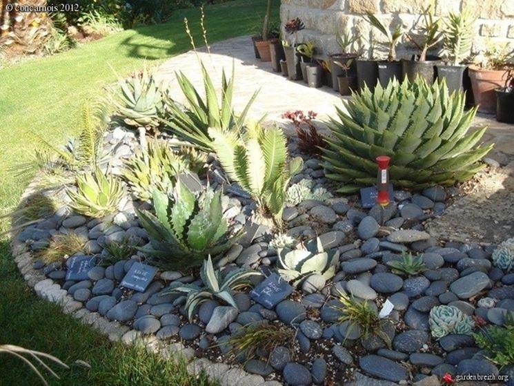 Particolare piante grasse