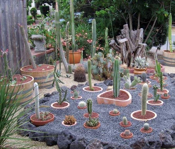 Top Giardino piante grasse - Piante grasse - Piante grasse in giardino VH12