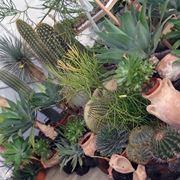 Un assortimento di piante grasse più comuni