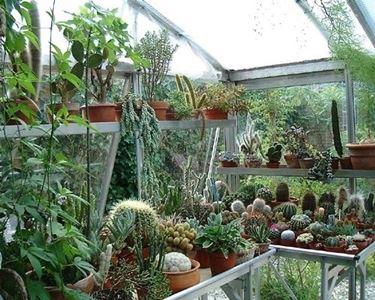 Assortimento di piante cactacee e non cactacee