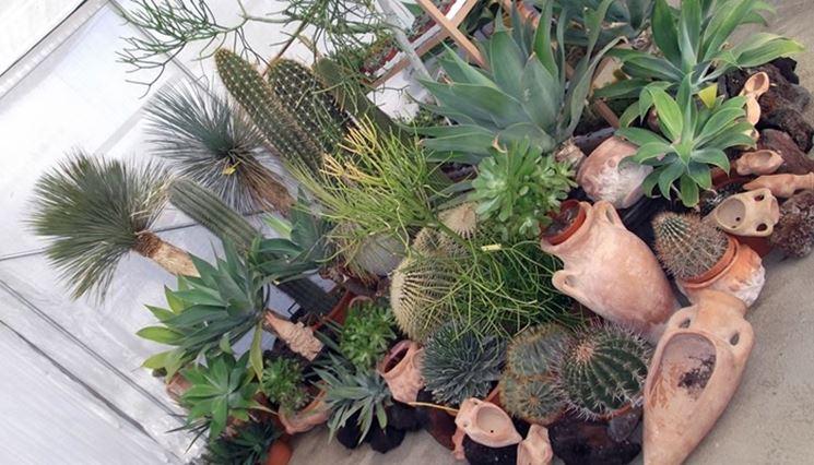 Innaffiare piante grasse piante grasse come innaffiare for Piante grasse in giardino