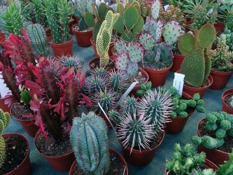 Varietà di piante grasse in una serra
