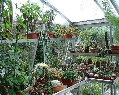 Innaffiare piante grasse piante grasse come innaffiare - Piante per terrazzi ...