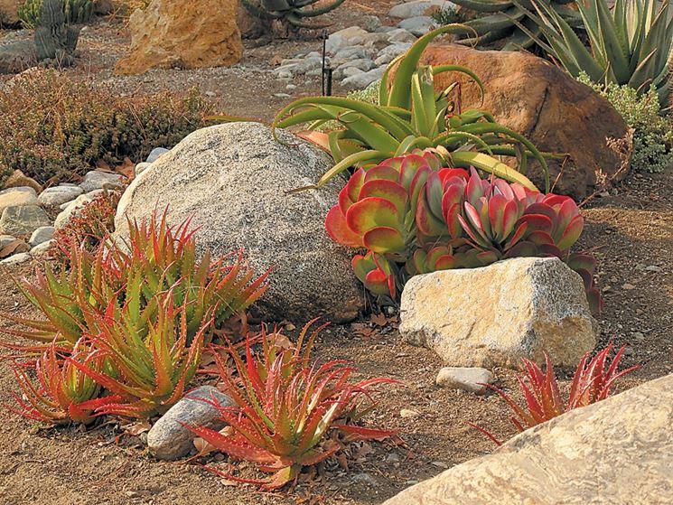 Kalanchoe giardino roccioso