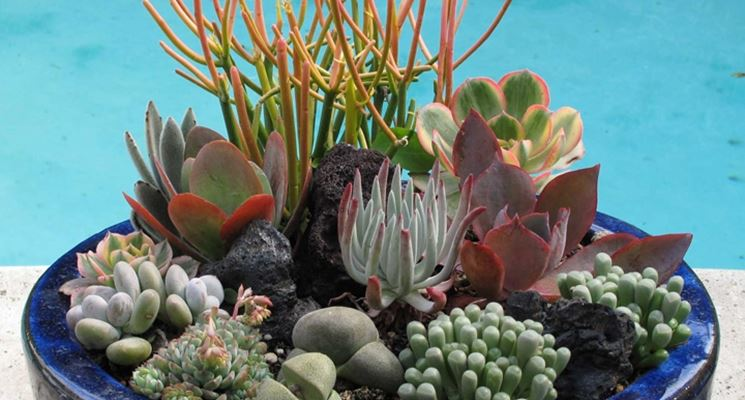 Bella composizione di piante grasse