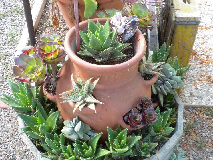 Fabuleux Migliori vasi per piante grasse - Piante grasse - Vasi per piante  MQ33
