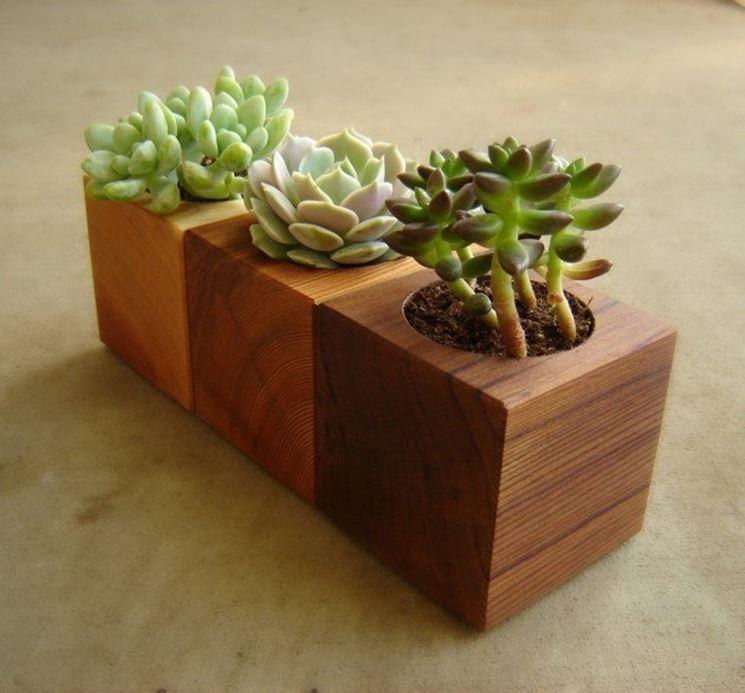 Vasi per piante grasse di legno