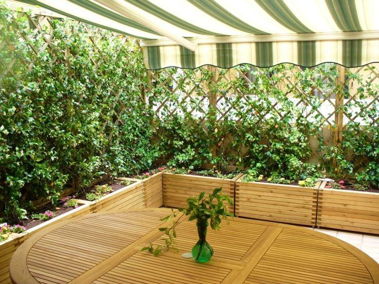Piante da siepe in vaso piante grasse siepe in vaso - Siepe in vaso terrazzo ...